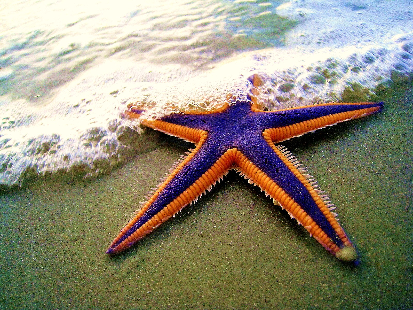 Starfish Banks CustomerXPs
