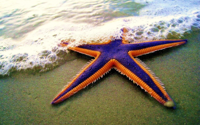 Starfish Approach to Fraud Management is hurting Banks. #StarfishBanks